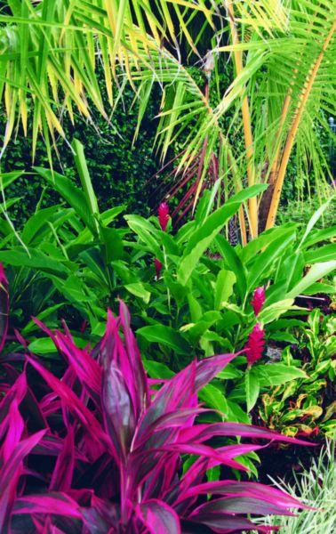 Wanted- Plants | Plants | Gumtree Australia Cessnock Area - Kurri Kurri | 1176037769