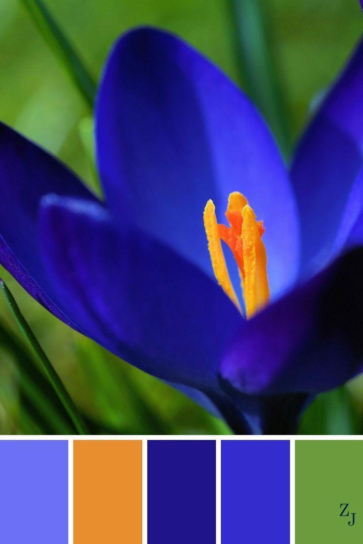 сочетание цветов в картинках синий самодостаточности