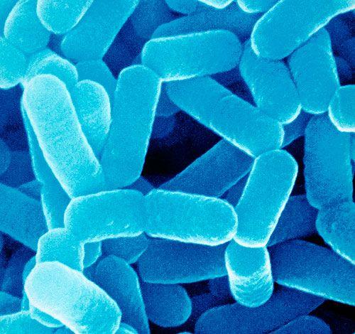 Как можно улучшить микрофлору кишечника: Как можно чаще употребляйте продукты, богатые природными пробиотиками и пребиотиками. Они способны восстанавливать нормальную микрофлору органов, разрушают патогенные и условно-патогенные бактерии. Включите в свой рацион натуральные пробиотики – квашеные и ферментированные продукты: капусту, огурцы и помидоры, кимчи, кефир, мисо, чайный гриб. А вот пребиотики содержатся в репчатом луке, чесноке, цельных злаках, капусте, спарже, зеленых листовых…