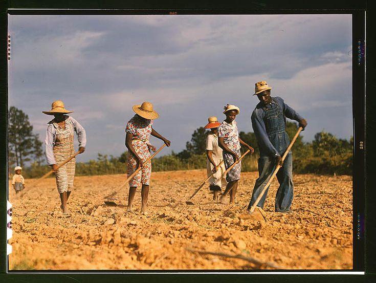 Chopping Cotton in Greene County, Georgia – June, 1941