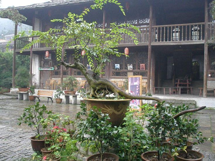 Dinosaur tree, outside Guiyang, China