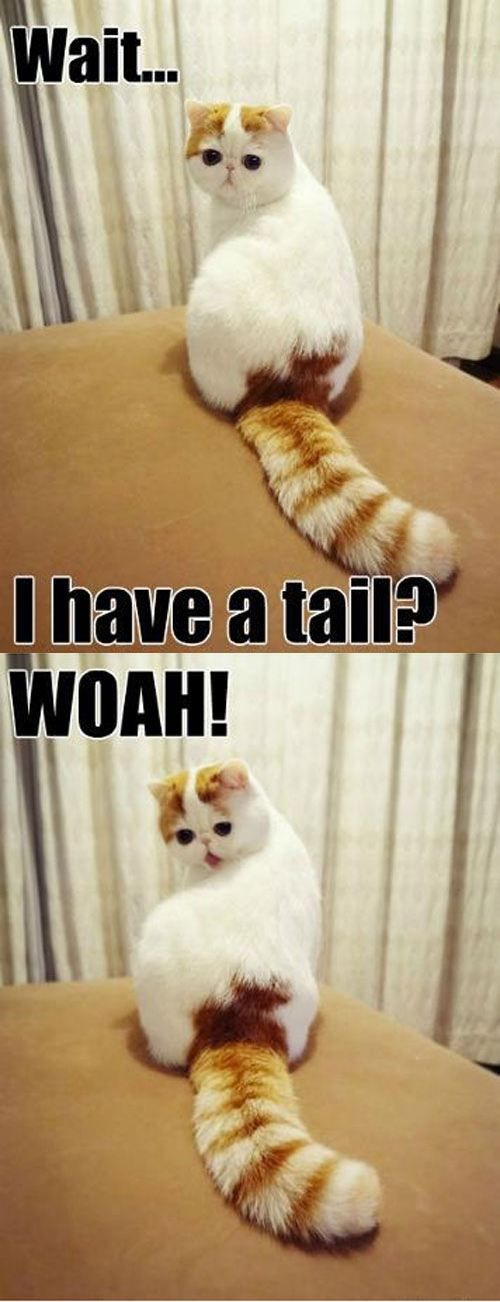 Fluffeh tail.