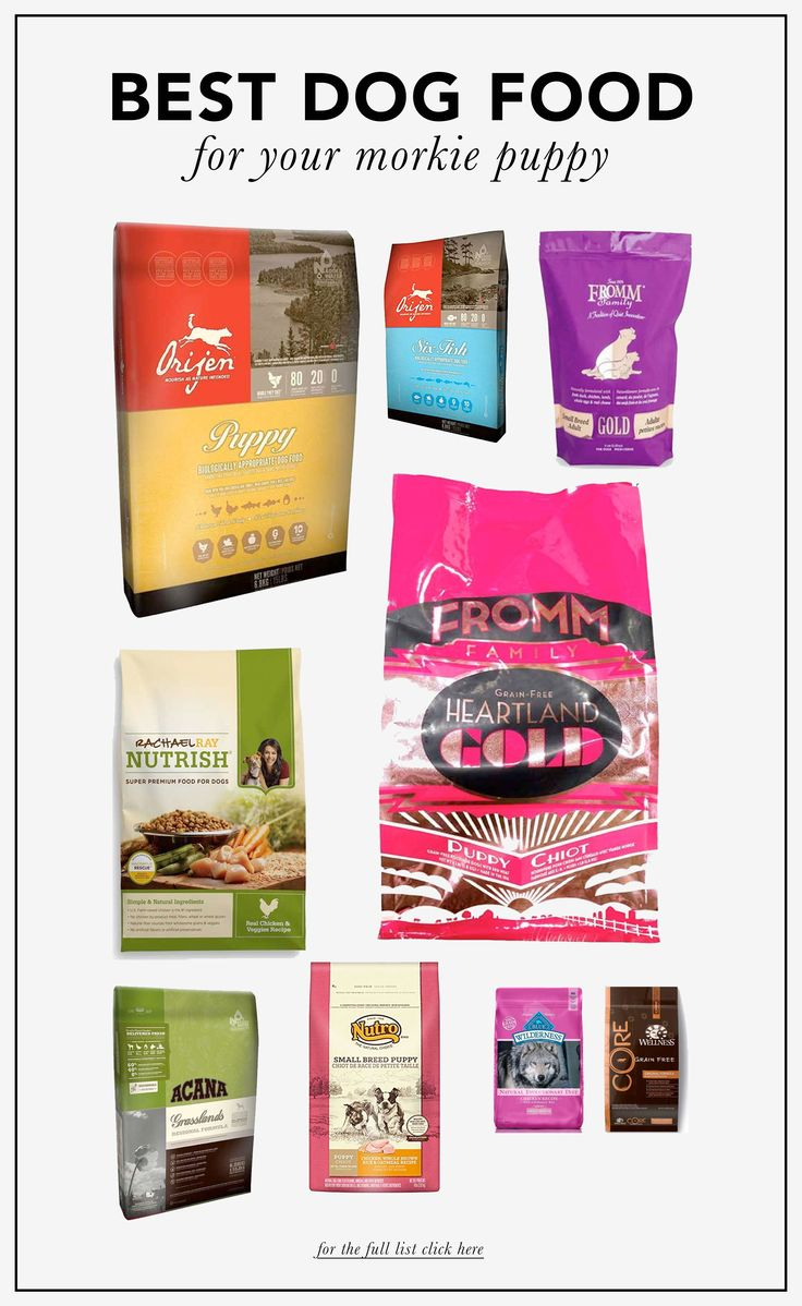 Top 10 Best dog food brands for Morkie dogs!