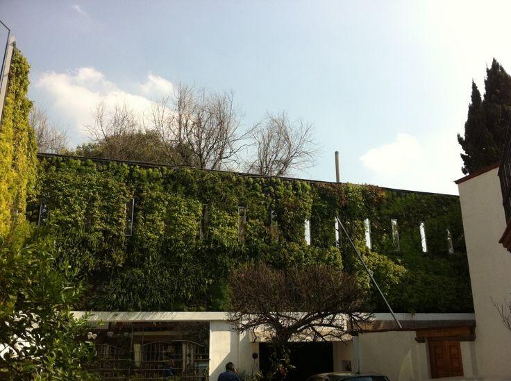 verde 360º muro verde