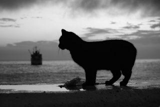 Soy un gato: El mito del gato negro