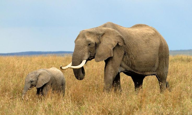 China will ban ivory trade by 2017
