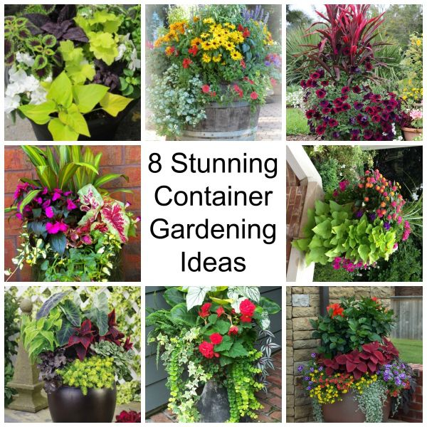 15 Stunning Container Vegetable Garden Design Ideas Tips: 8 Stunning Container Gardening Ideas