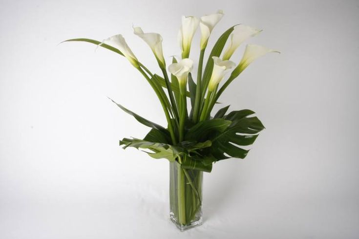 Big white calla arrangement arranged  with modern greenery monstera, young coco palm and aspidistra leaves,