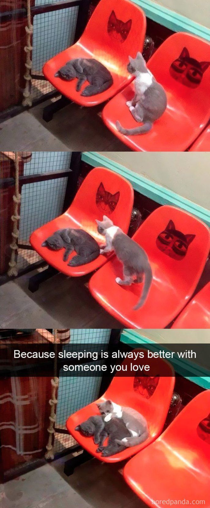 25+ Lustigste Katzen-Snapchats, die dir das größte Lächeln schenken – Mariska Vogelenzang de Jong