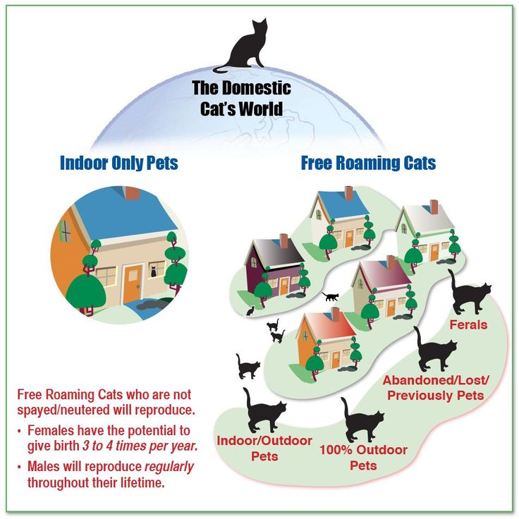 Companion Animal Overpopulation: What You Can Do