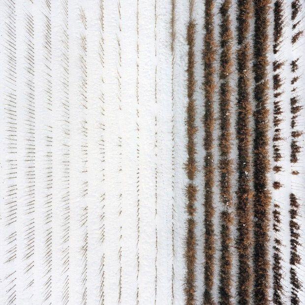 Aerial Photos of Tree Farms by Gerco de Ruijter