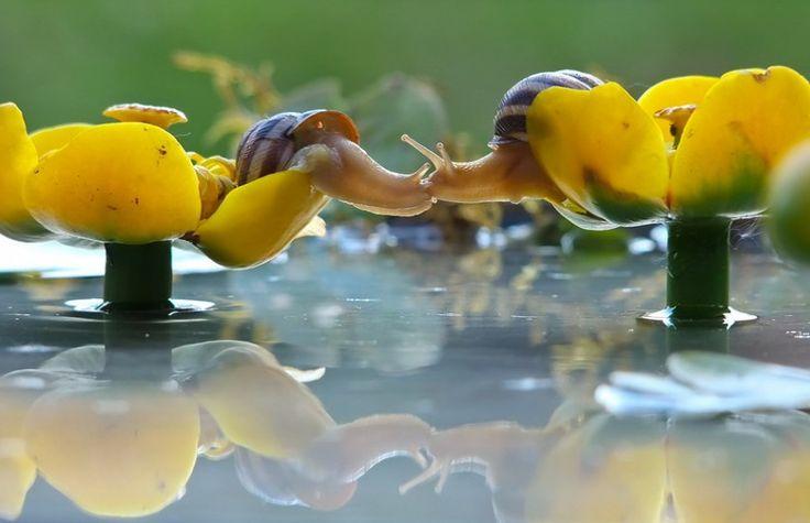 fotos de animais se beijando caracois