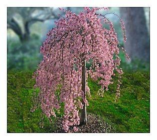 Swingers in cherry tree pennsylvania
