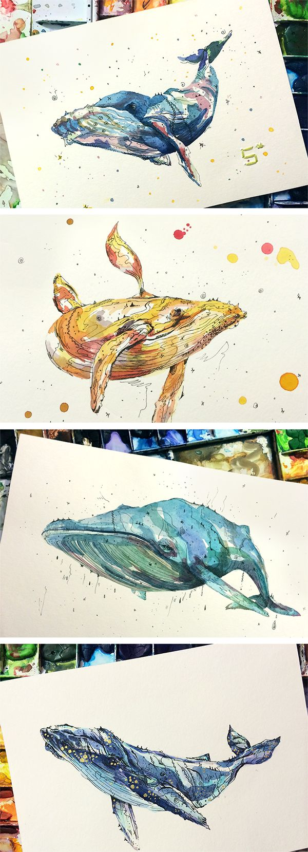Whale watercolor series - sujinlee