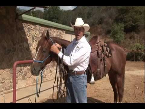 Understanding The Snaffle Bit by Road to the Horse champion Richard Winters!