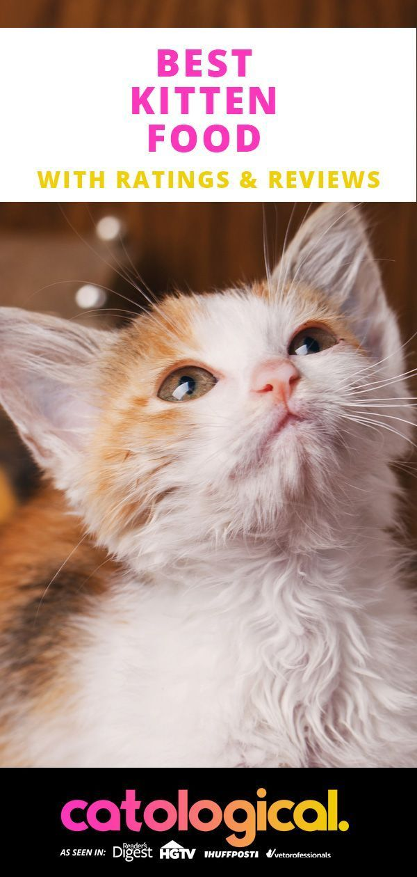 Best Kitten Food For Healthy Baby Cats Reviews Of Top Wet Dry Brands Kitten Food Kittens Baby Cats