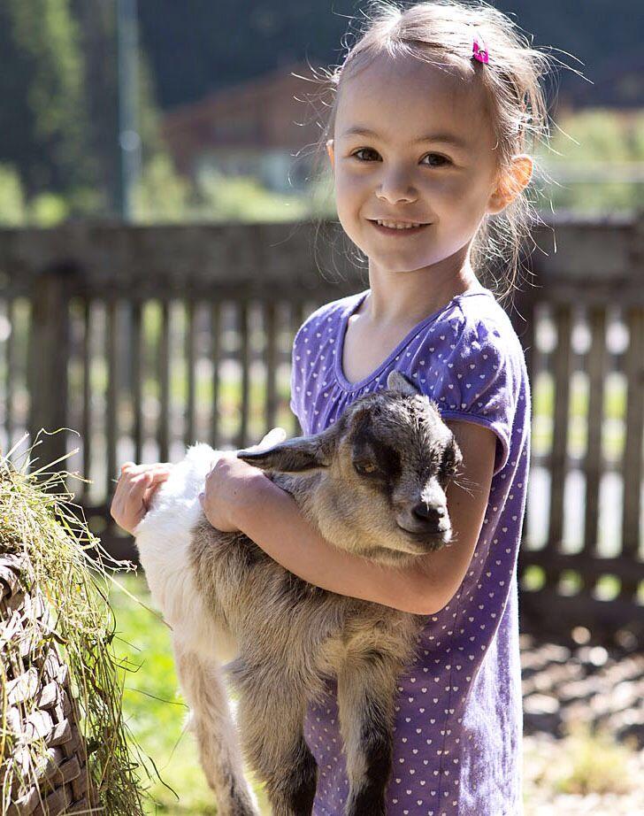 Ziegen im Streichelzoo // Goats in the petting zoo