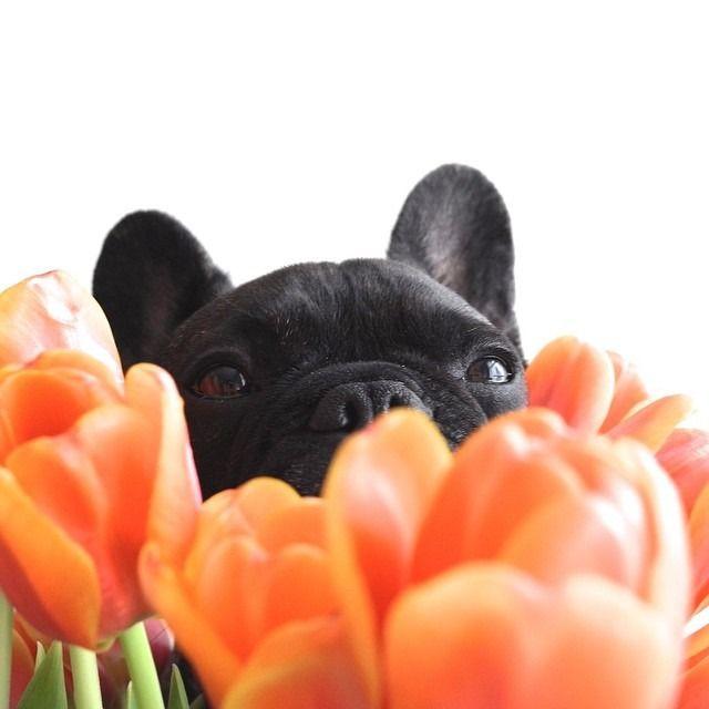 everyone loves spring!
