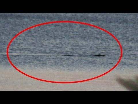 THE BEST AND LAST NESSIE VIDEO - THE LOCH NESS MONSTER ...