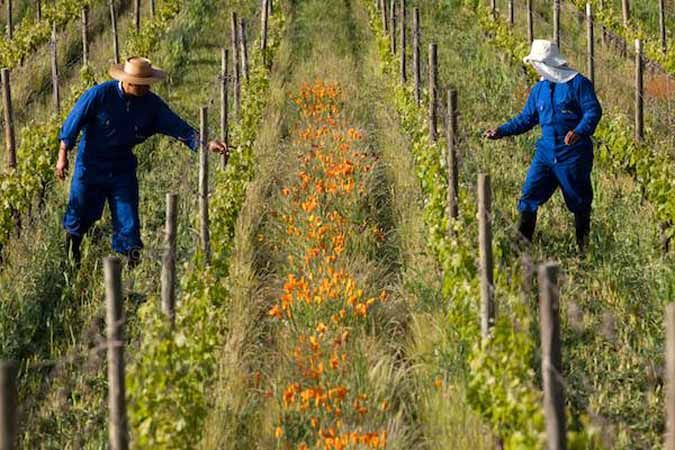 Spring, Colchagua Valley, Chile