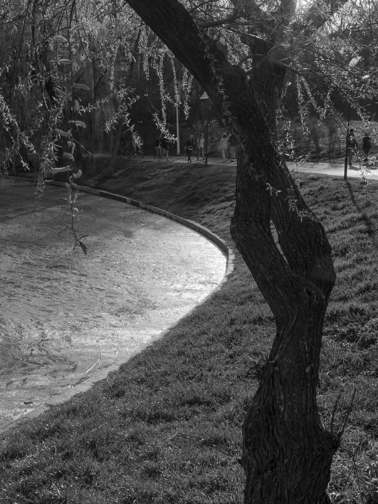 park, trees, hill, grass, people, strollers, tree, black and white, sky, reflections, shadows, sunset, sun, water
