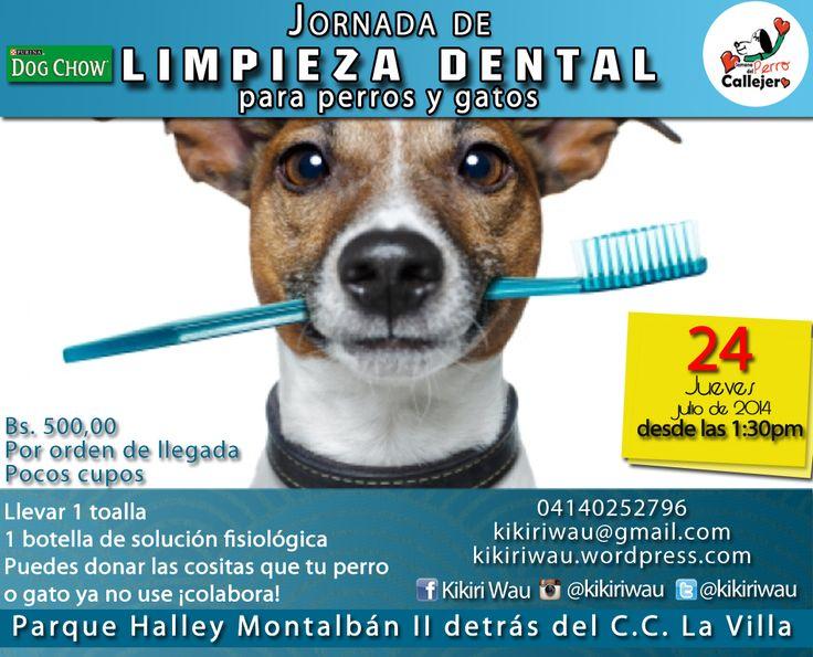 Jornada de salud dental, limpieza dental para peludos con o sin hogar a bajo costo