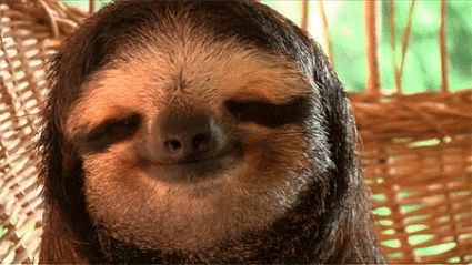 HAPPY SLOTHSGIVING !!! | 21 Ways Sloths Are Living Life Right
