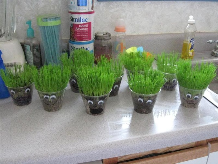 """We made these for Father's Day one year.  The kids loved helping dad """"cut his hair"""" as the grass grew upwards!  Simply plant grass seeds in a cup and let the kids water them."""