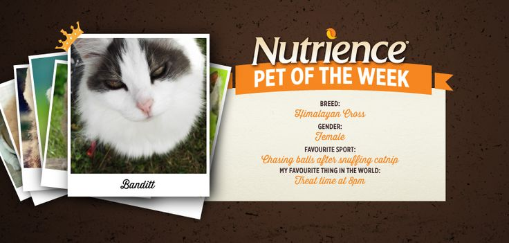 Banditt is a creatre of habit and l#oves treat time at 8 p.m. Submit your #pet for #Nutrience Pet Of The Week here: http://bit.ly/PetOfWeek #cat #cats