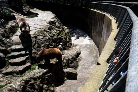 """""""Δράσεις"""" Οικολογία και Περιβάλλον: Φεύγουν οι αρκούδες και οι λύκοι από τον Ζωολογικό..."""