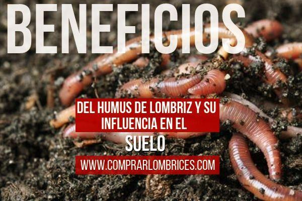 Comprar Lombrices Rojas Californianas Eisenia Foetida En España Importancia Del Humus De Lombriz Y Su Influenc Lombrices Californianas Lombriz Lombricultura