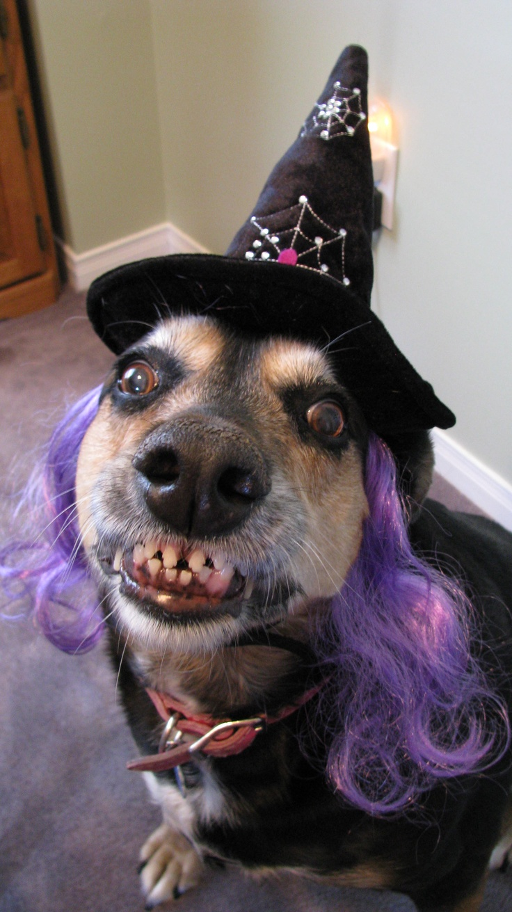Halloween 2009 ...yes those are her real teeth no gimmicks !!