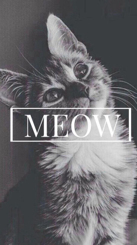 Meow Cute Cat iPhone 6 Wallpaper