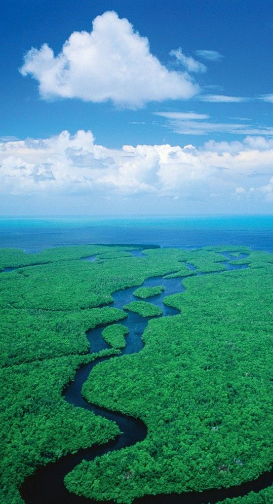 Everglades National Park, near Orlando, Florida - The Kissimmee River discharges into Lake Okeechobee & the water leaving the lake in the wet seasons forms a 60 mile wide & 100 mile long river. The sawgrass marshes are a habitat for manatee, the American crocodile and the Florida Panther.