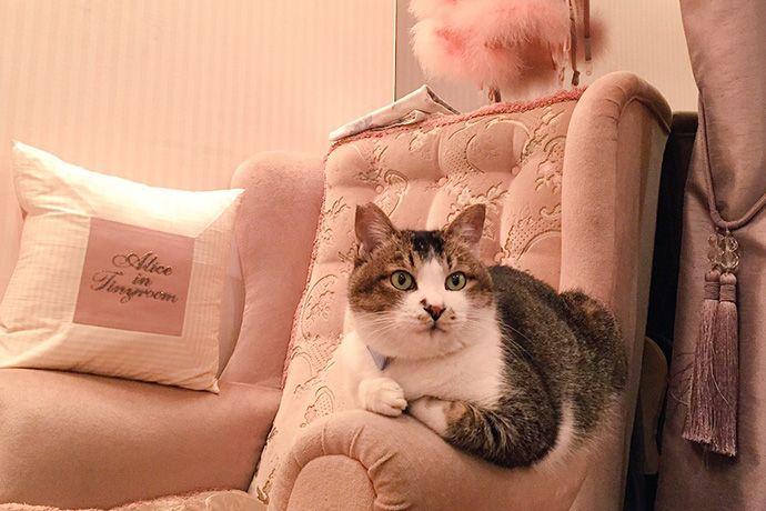 ネコへの気持ちで文化の壁を越える、 男ひとりでジュエリーショップ訪問 - ソロ活 / レッツエンジョイ東京