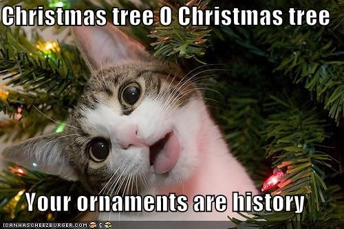 When you own a cat...so true.
