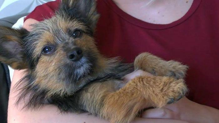 Teenageři mučili psa, zlámali mu nohy a poté ho zapálili. On všechno přežil a i přesto stále miluje lidí.