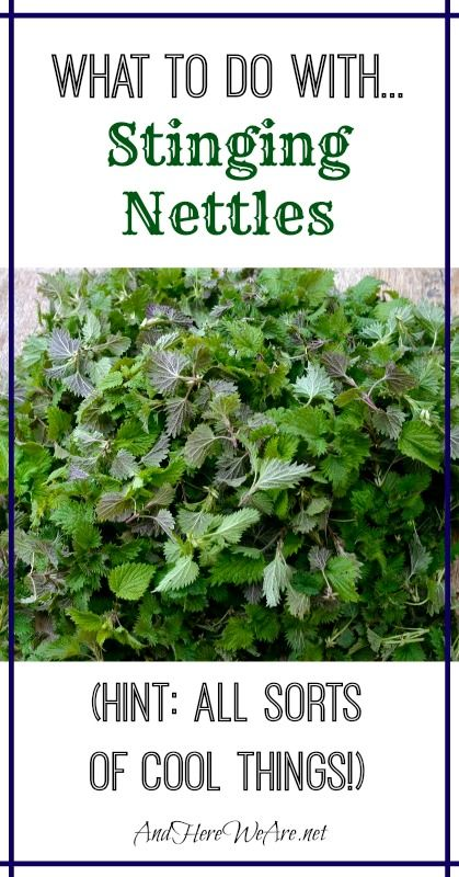 What to Do With Stinging Nettles (hint - all sorts of cool things!)
