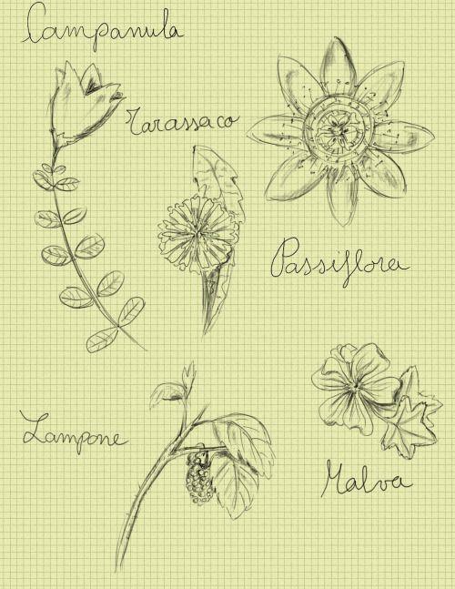 Drawing plants  elisa boldrin