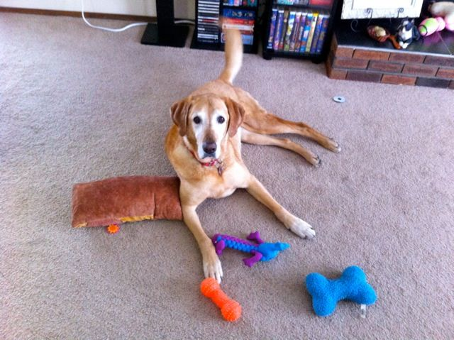 """""""We have a 10½ year old Lab that we adopted about two years ago from an older couple that split up.  """"Suzie"""" has bad arthritis in her back knee joints and we were giving her glucosamine/chondroitin and Omega 3-6-9 supplement pills. Just over a month ago our local pet food supplier, Global Pet Foods, introduced us to your product so we gave it a try. Does seem to work a bit better, and is certainly more convenient than the pills."""" ~ M. Rhodes, Canada"""