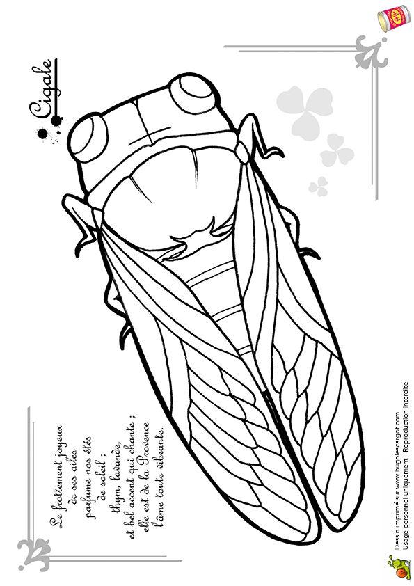 Coloriage La Petite Cigale - Hugolescargot.com
