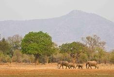 Passage To Africa - South Luangwa - Zambia #Elephants #Landscape