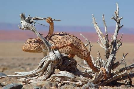 Self Guided Tours Namibia  http://www.afrizim.com/Places/Namibia/Self-Drive-Tours/#