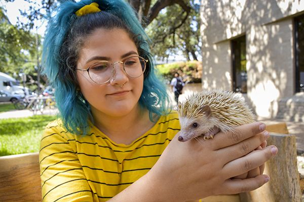 Pet Therapy Has Become A Growing Trend Among College Students More Ut The Daily Texan Emotional Support Animal Unusual Animals College Students