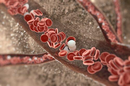 Когда наш организм начинает стареть, артерии теряют свою эластичность, в результате чего развиваются сердечно-сосудистые заболевания.