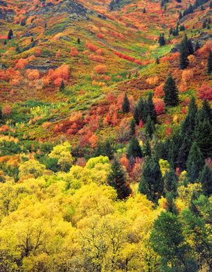 autumn tapestry   Logan Canyon Scenic Byway Utah  US 89 First Damn along the Logan River  Peak viewing early October