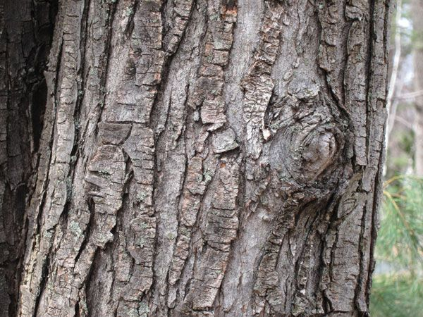 17 Best images about The Lake: Tree Texture on Pinterest ...