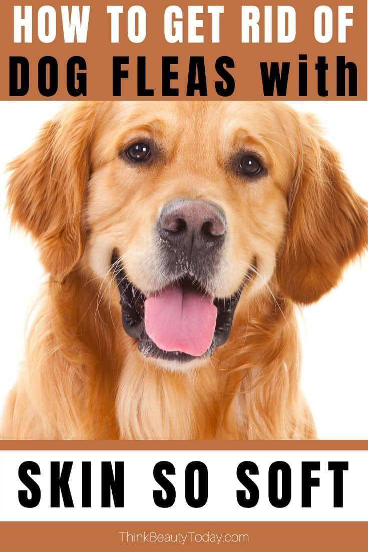 Avon Skin So Soft Uses For Dogs How To Get Rid Of Fleas Black Flies In 2020 Avon Skin So Soft Skin So Soft Dog Dry Skin