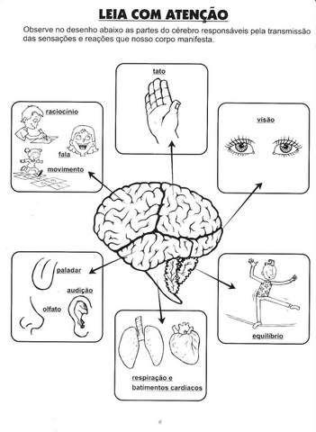 Atividades sobre Sistema Nervoso - Ensino Fundamental. | Aprender e Brincar