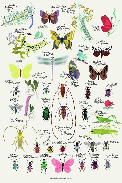 Op deze prachtige poster zijn verschillende insecten afgebeeld.   Een kleurrijke poster met liefde voor de natuur.